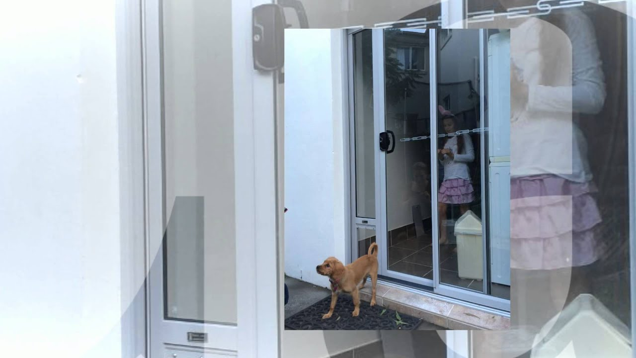 Puppy Using Patio Link Pet Door Insert For A Very First