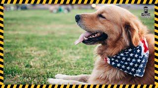 Dog Barking Sound Effect Free Download   MP3 WAV   Pure Sound Effect