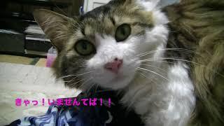 【猫記録404】居留守を使う第1たぬき&まぐろを食べ損ねる第2たぬき thumbnail