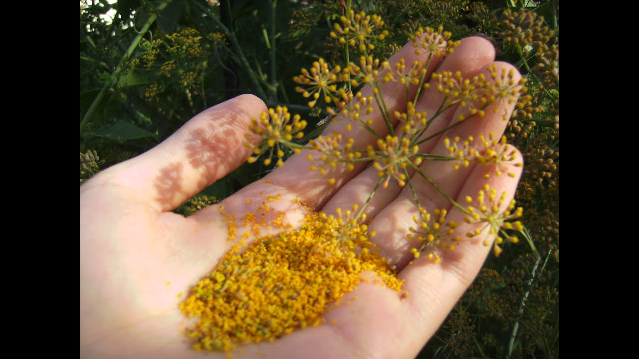 Bee Friendly, Edible Pollen Harvest: How to Collect Sweet, Gold ...