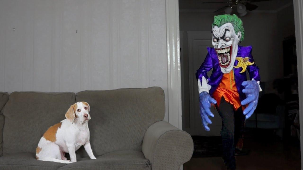 Dog Pranked by Joker Funny Dog Maymo & Dog Pranked by Joker: Funny Dog Maymo - YouTube