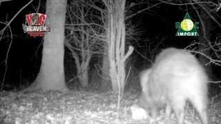wild boar attractant, hog heaven from rocimport