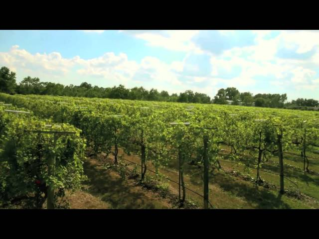 Haak Vineyards & Winery Texas Commercial 3 minutes 2012
