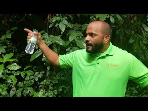 Trip - RainForest Tours - San Juan Puerto Rico - shot w/Samsung S8+