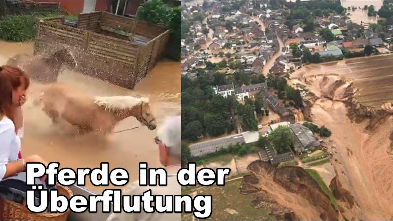 Pferde in der Überflutung