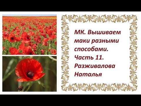 Poppy Rose :: Энциклопедия роз -