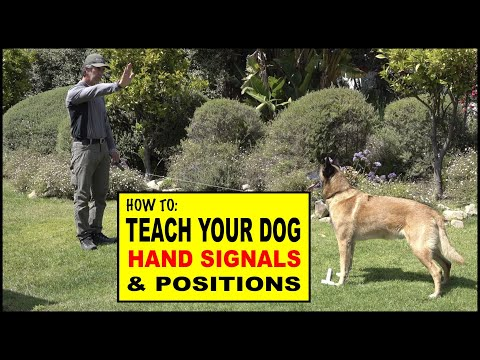 How to Teach Hand Signals and Positions to Your Dog - Dog Training Video
