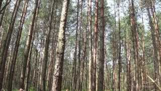 forest (singing birds, beautiful sunny day, the beauty of nature) relax, meditation part 1