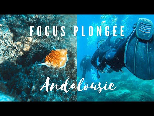 VLOG PLONGEE : LES NUDIBRANCHES DE MARO BEACH EN ANDALOUSIE (Espagne)