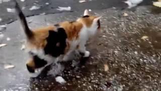Кошки: как можно выбросить на улицу такую красотку?!