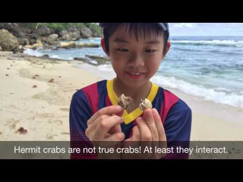 Protect the red crabs of Christmas Island