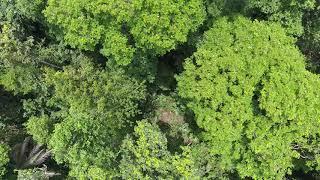 Desde el árbol al manejo integral del paisaje