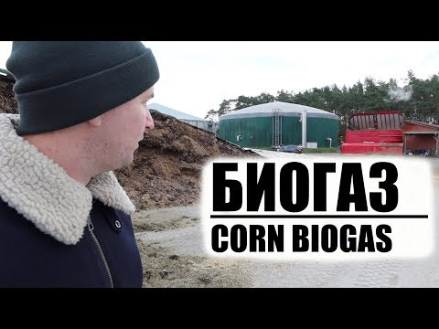 Уборка кукурузы и