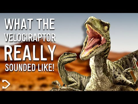 What Did The Velociraptor REALLY Sound Like?