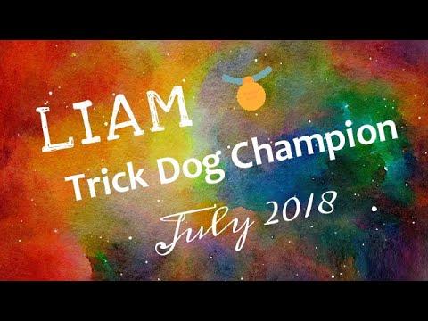 LIAM Trick Dog Champion (TDCH) Title