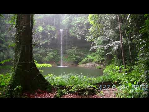 Canon In D Theta Waves Isochonic In Forest And Rain 444hz