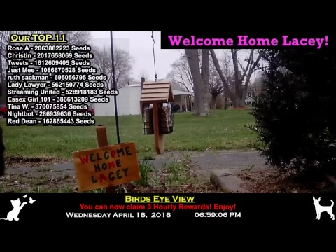 STORM WATCH **** Ohio Bird-Cam and Chat with Flipcoin 24/7 Chat