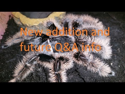 New addition plus info on future Q&A (add questions in the comments section below)