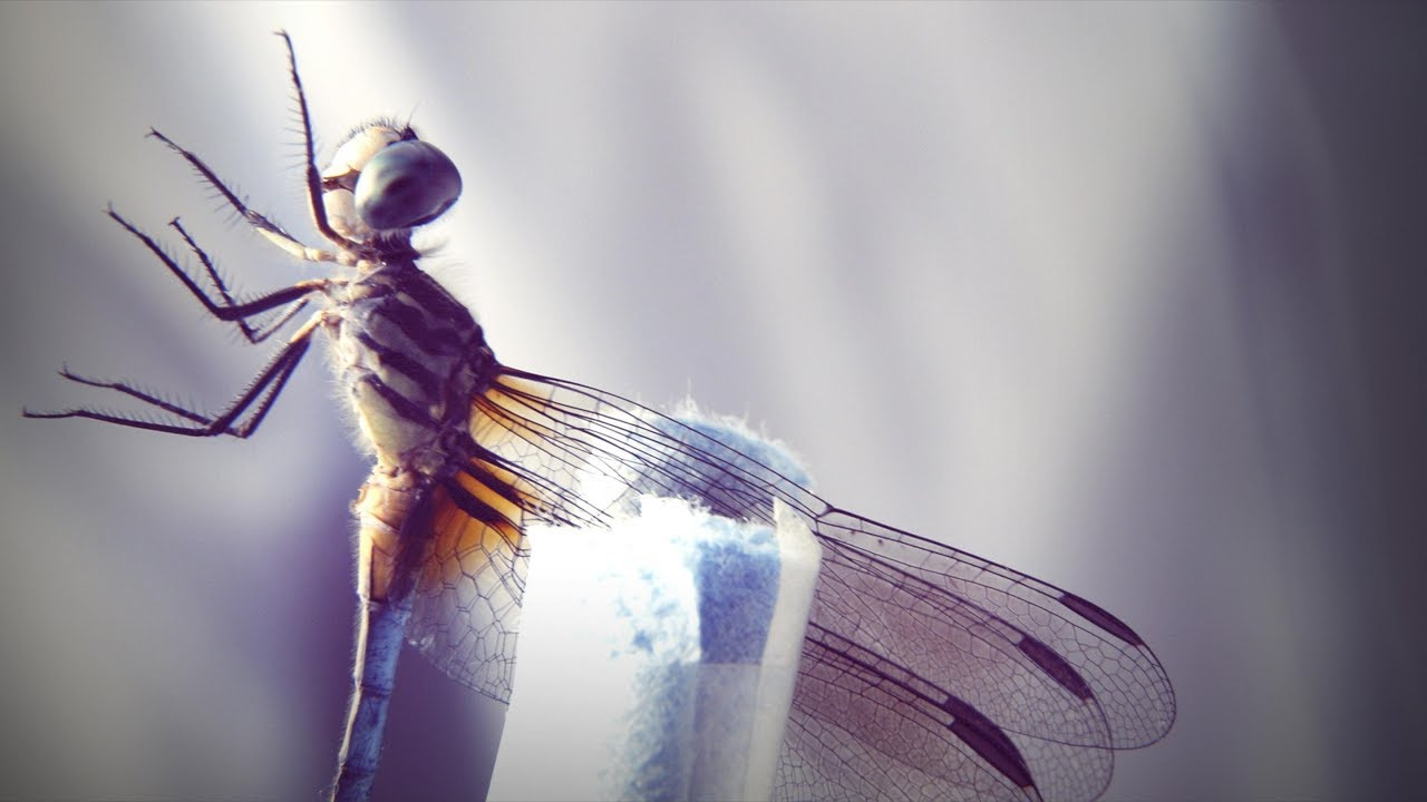 How a dragonfly's brain is designed to kill | DIY Neuroscience, a TED series