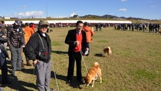 NIPPO GRAND NATIONAL DOG SHOW 2012 平成24年11月18日撮影 開催...