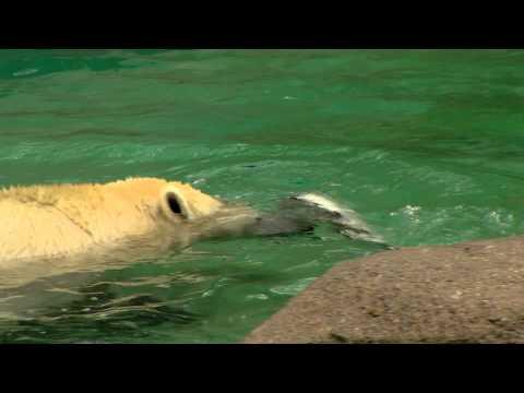 Keeping Animals Cool - Cincinnati Zoo
