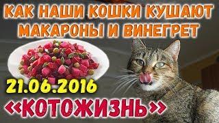 Как наши кошки кушают макароны и винегрет ❖ КОТОЖИЗНЬ! 21.06.2016