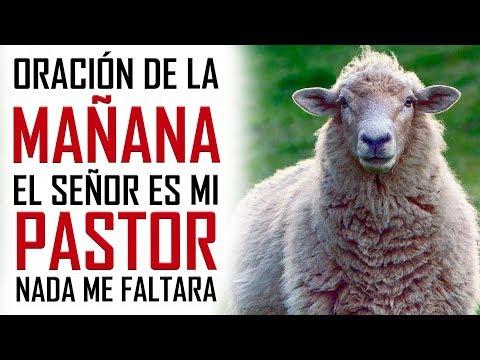 ORACION DE LA MAÑANA 🙏  EL SEÑOR ES MI PASTOR 🐑 Y NADA ME FALTARA 🍇💰👕 SALMO 23 📖