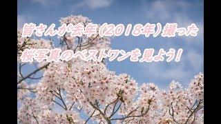 去年(2018年)の桜を振り返り 皆さんのベストワンを見ていきましょう! thumbnail