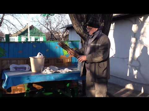 видео: Как нарезать и хранить чубуки ( черенки ) винограда