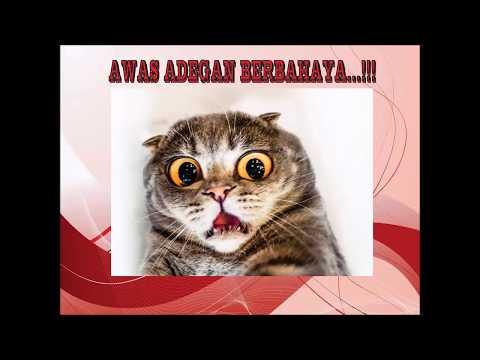 VIRAL...!! Lucu Kucing Pura-Pura Pingsan... :D
