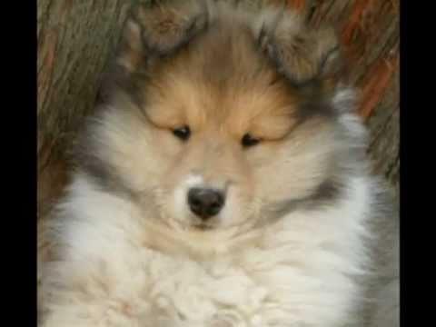 Les plus belles races de chiens du mondes youtube for Le plus beau canape du monde