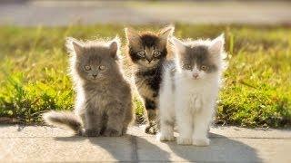 Милые животные Котята и щенята Страшные машины