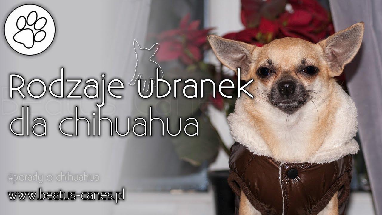 R Chihuahuas Smart Rodzaje ubranek dla ch...