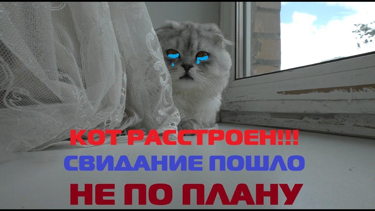 Видео коты блоггеры
