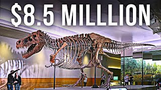 The Most Expensive Fossil Ever Discovered