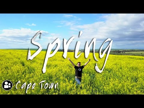 Spring Time in South Africa | West Coast Flowers