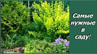 Смотреть видео Декоративные кустарники для сада