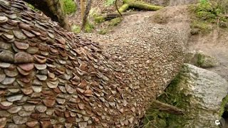 هل رأيت شجرة نقود من قبل ؟ شاهد هذه الشجرة التي تحمل آلاف القطع النقدية