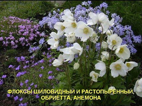 Как определить название растения?
