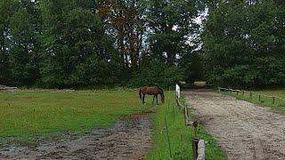 Z Pszczaką wśród zwierząt - Konie