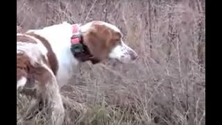 Quail Hunting in Clarksville, Tennessee