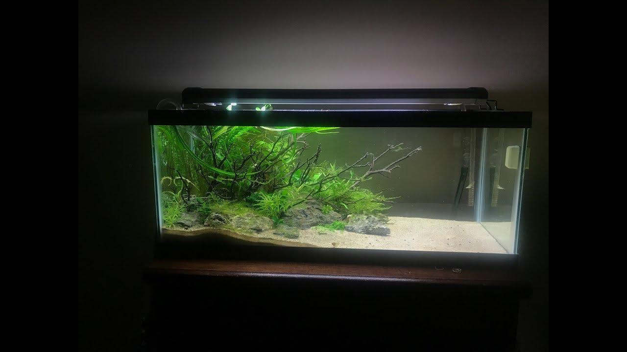 20 Gallon Long Aquascape Update - YouTube