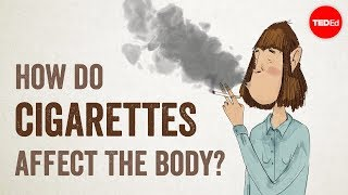 TED-Ed: How Cigarettes Affect the Body thumbnail
