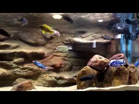 Lake Malawi African Cichlids | How i filter my cichlid tank