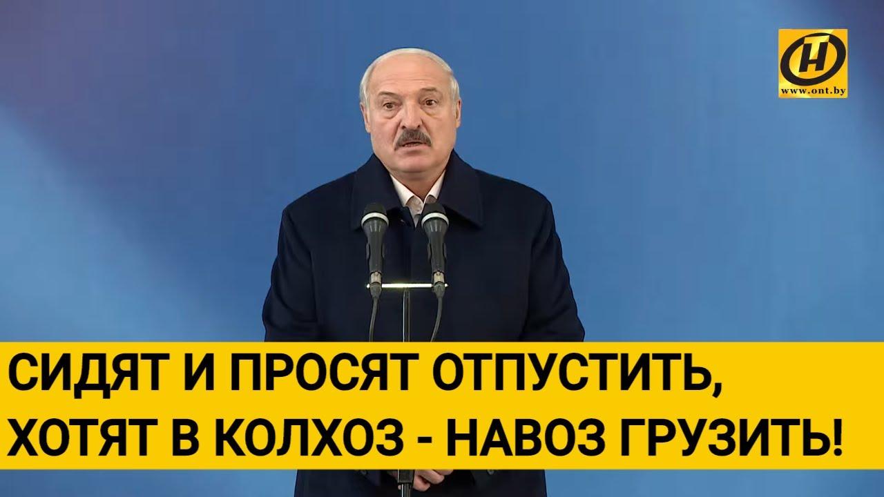"""Картинки по запросу """"Лукашенко отказал 4 директорам сахарных заводов в просьбе грузить навоз вместо тюрьмы"""""""