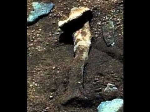 Fossilized Bones, Petrified Wood, Fungus & Lichen, Growth & Movement, Life on Mars, Curiosity Rover
