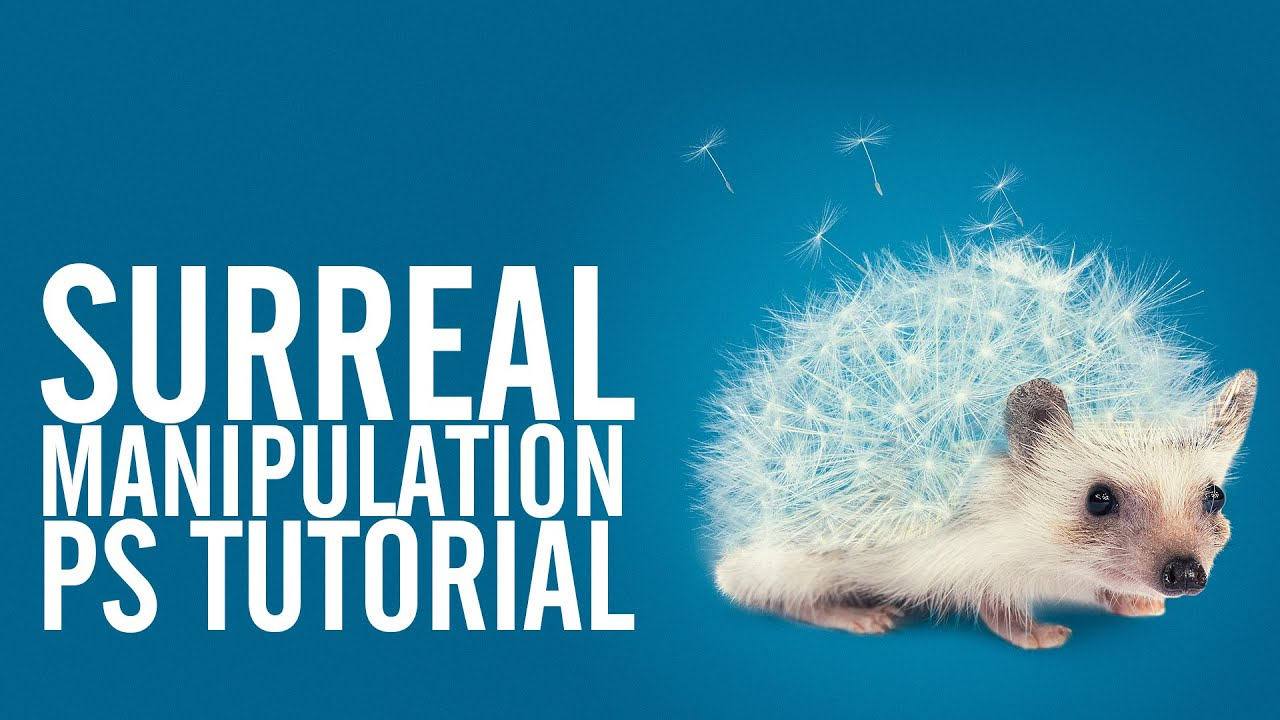 Surreal Photoshop Tutorial - The Hedgehog - YouTube