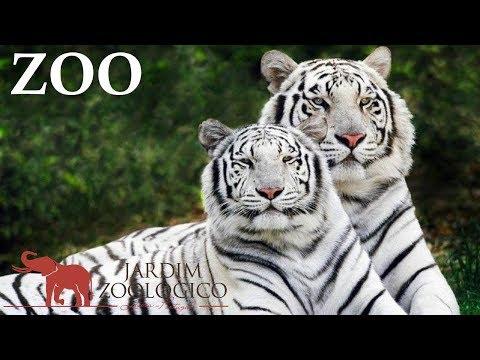 Lisbon Zoo - Portugal HD