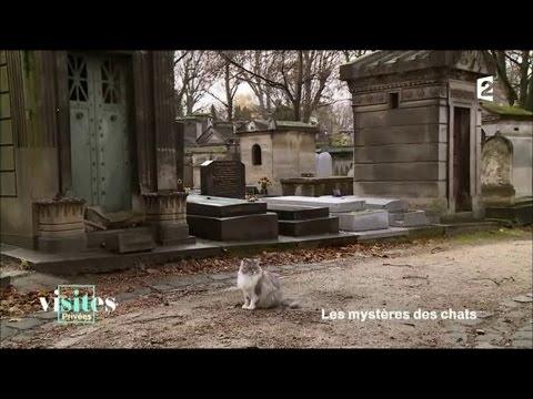 L'école Des Chats De Montmartre - Visites Privées