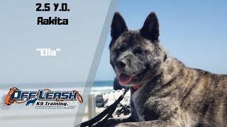 AKITA/DOG TRAINING